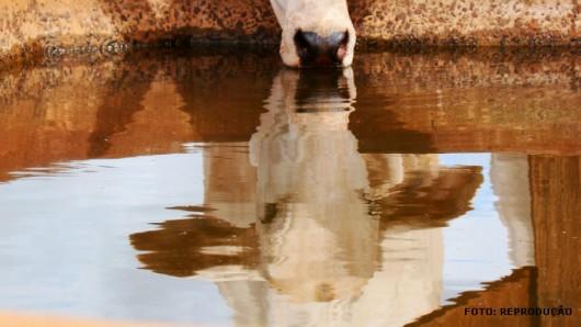 gado de corte - confinamento