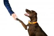 Aprenda Fácil Editora: Ensine o seu cãozinho a dar a patinha!