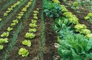 Aprenda Fácil Editora: Aprenda a fertilizar a sua horta de maneira orgânica
