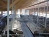 Pontos que levam à adesão do confinamento de bovinos leiteiros