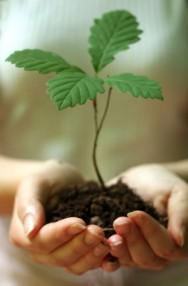 Aprenda Fácil Editora: Aprenda a produzir sementes arbóreas para a restauração florestal de áreas degradadas
