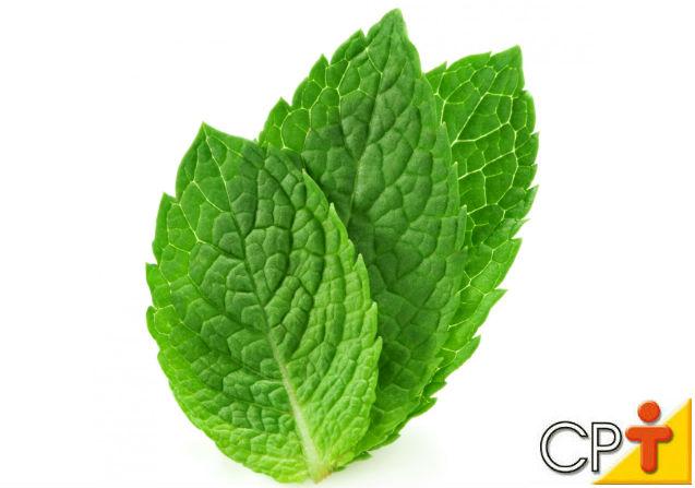 Horta - como plantar Hortelã (Mentha piperita)   Artigos Cursos CPT