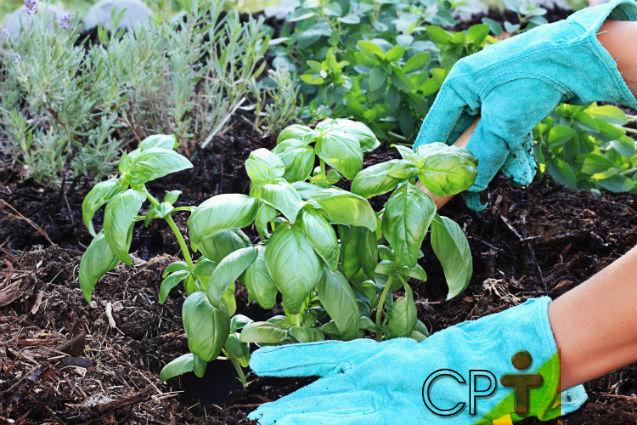 Horta - como plantar majericão   Artigos Cursos CPT