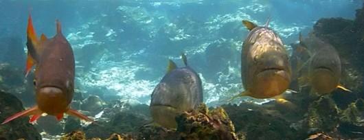 Peixes de água doce do Brasil - principais espécies, distribuição geográfica, habitat, alimentação, reprodução e características gerais