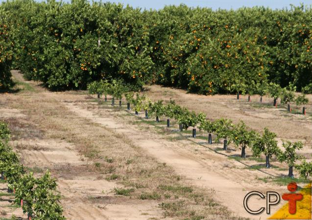 Plantação de árvores frutíferas - seleção das mudas para o plantio   Artigos Cursos CPT