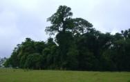 Novo Código Florestal Brasileiro - Área de Preservação Permanente (APP)