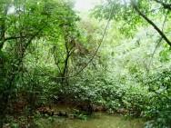 Novo Código Florestal Brasileiro - finalidades da vegetação e as APPs.
