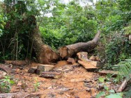 Novo Código Florestal Brasileiro - desmatamento.