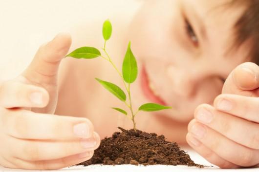 plantação de árvores frutíferas