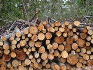 Novo Código Florestal Brasileiro - exploração de madeira em florestas plantadas.