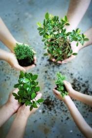 Aprenda Fácil Editora: Restauração Florestal a partir do Plantio Aleatório