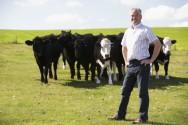 Inseminação artificial em gado de leite - momento ideal para inseminação
