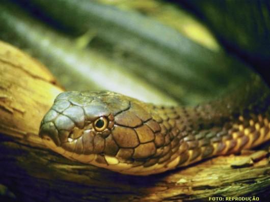 Se possível, o ideal é olhar bem para a serpente, para poder fazer  uma descrição precisa ao médico