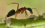 Primeiros socorros - picada de formiga