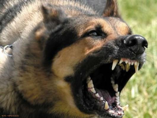 Em caso de ataque de animal, com mordida,  procure atendimento médico com urgência