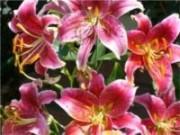 Mês das noivas e dias das mães faz aumentar o comércio de flores no mês de maio