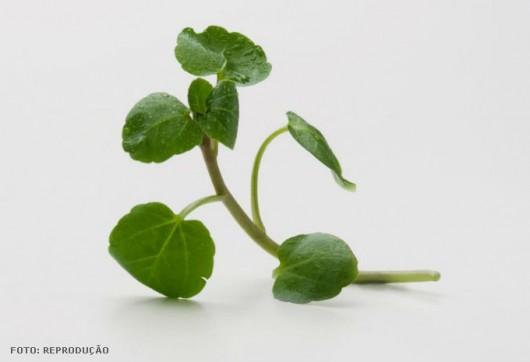 De folhas pequenas e verde-escuras, a hortaliça é uma excelente opção para enriquecer saladas