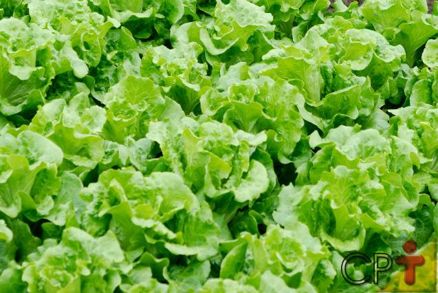 Horta - como plantar Alface (Lactuca sativa)   Artigos Cursos CPT