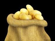 Horta - como plantar Batata (Solanum tuberosum)