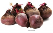 Horta - como plantar Beterraba (Beta vulgaris)