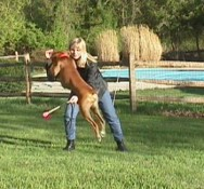 Aprenda Fácil Editora: Truques Caninos: Como pular uma vassoura