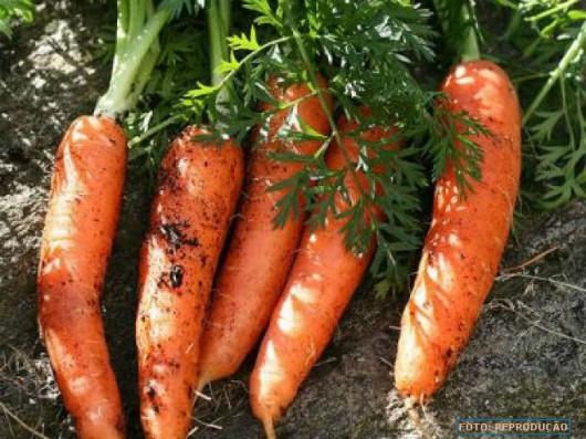 Horta - como plantar Cenoura (Daucus carota)