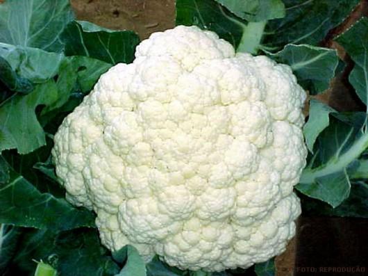 A Couve-flor desenvolve-se mal em solos de acidez elevada