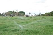 Irrigação de pastagens gera alta produtividade na entressafra