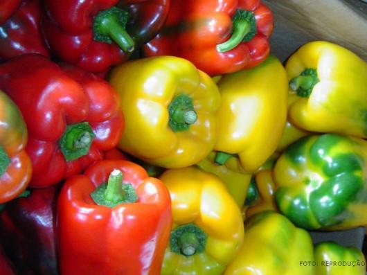 Horta – como plantar Pimentão
