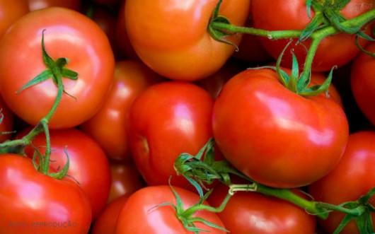 Horta - como plantar Tomate.