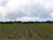 Produtores de todo o Brasil poderão ser beneficiados com o novo Plano Agrícola e Pecuário (PAP) 2013/2014.