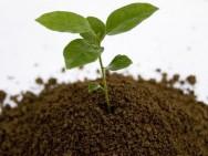 Aprenda Fácil Editora: Adubação no plantio orgânico