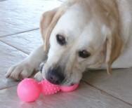 Aprenda Fácil Editora: O que fazer com o comportamento destrutivo do seu filhote de cachorro?