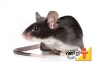 Pragas Domésticas: doenças causadas pelos ratos