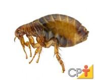 Pragas Domésticas: como evitar o surgimento de pulgas