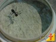 Pragas Domésticas: medidas preventivas para o controle de formigas