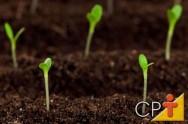 Fruticultura: mudas