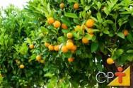 Fruticultura: resumo e sequência do plantio para implantação do pomar