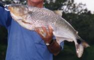 Peixe de água doce Piabanha.