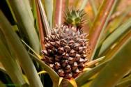 Cultivo de Bromélias - dez dicas básicas para o iniciante