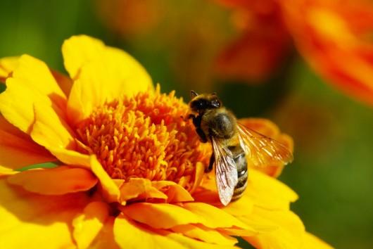 Como Criar Abelhas Nativas sem Ferrão curso a distância