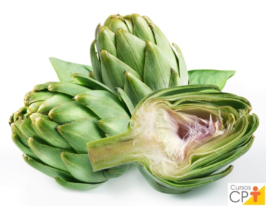Horta: como plantar Alcachofra (Cynara cardunculus subsp scolymus)   Artigos CPT