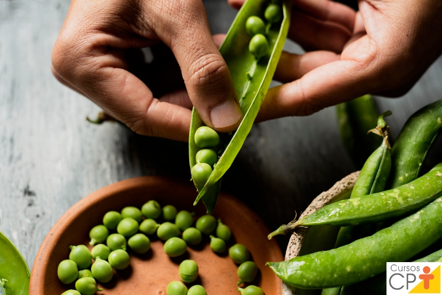 Horta: como plantar Ervilha (Pisum sativum)    Artigos CPT