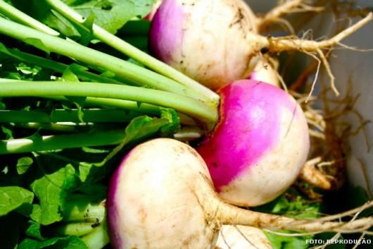 Horta - como plantar Nabo (Brassica rapa L.)
