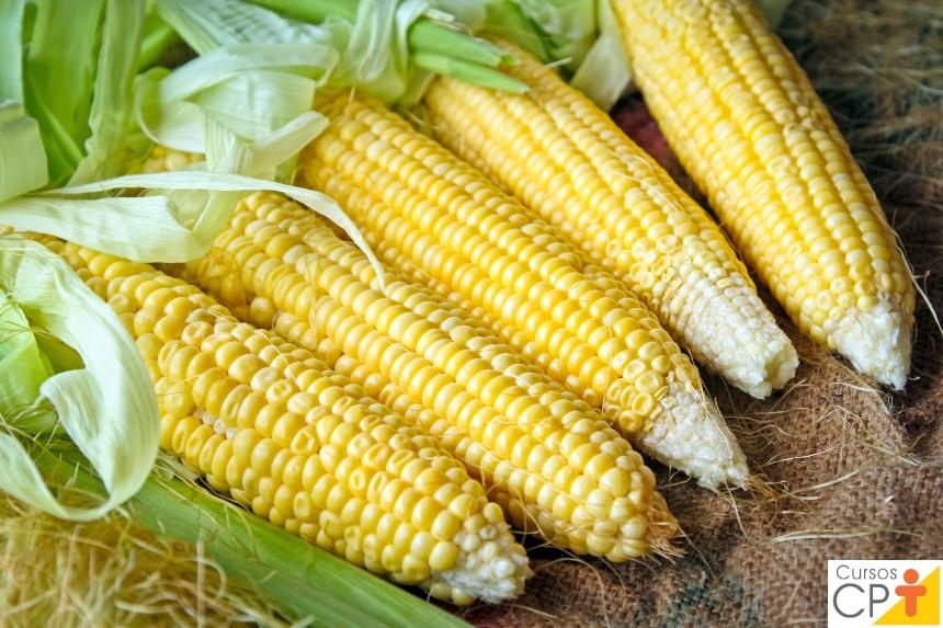 Processamento de Milho Verde: o milho   Artigos CPT