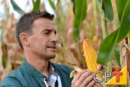 Processamento de Milho Verde: características do milho verde