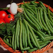 Horta - como plantar Vagem (Phaseolus vulgaris)