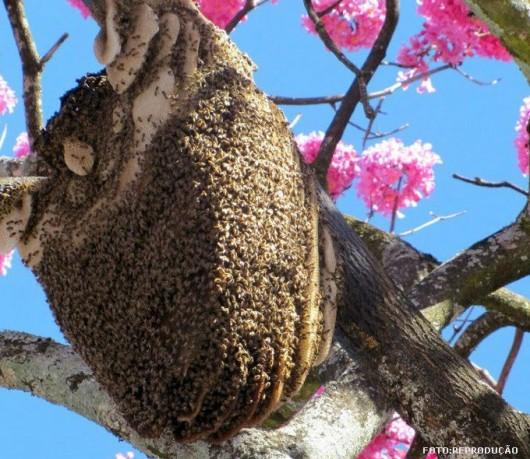 Abelhas - termorregulação da colmeia