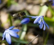 Abelhas - a dança em busca de alimento