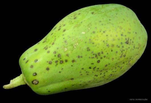 Pragas do mamão - Nematoides
